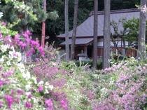 9月、満開の萩の花と瑞源寺