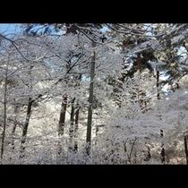 冬_木々の雪