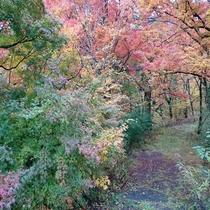 鐘山の滝付近の紅葉