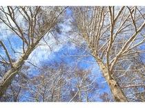 冬の晴れ間、青空がきれいです