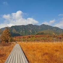*紅葉で色づく戦場ヶ原は息をのむ美しさです。