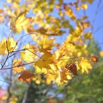 *秋の中庭(紅葉)