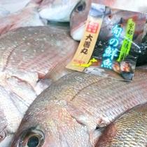 *地元漁港水揚げの鯛