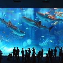 沖縄美ら海水族館「黒潮の海」