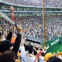 プロ野球沖縄キャンプ(2月-3月)
