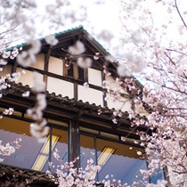 お花見シーズンには当館周辺が見事な桜で満開になります。