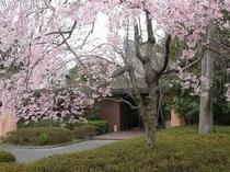 桜の頃の宿泊棟