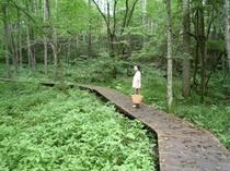 竜人池の木道を歩くと、池の周りを1周できます