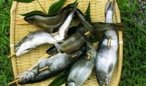新鮮な川魚を提供することもございます。