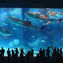 「美ら海水族館」まで車で約30分