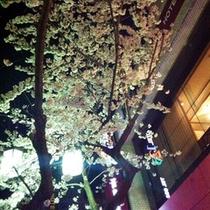 ◇◇外観・桜・玄関より◇◇