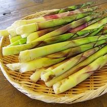 【ネマガリダケ】小さな竹の子のような山菜♪夕食の付け合せにお出しします★