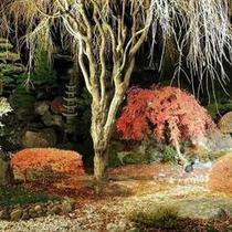 ライトアップされた紅葉の日本庭園(秋)