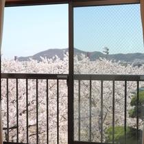 *お部屋からの眺め(春)