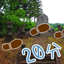 *【松尾神社】宿から片道徒歩20分 池より長い散歩コース