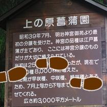 *【おまつの池】池のほとりには名称の由来が書かれた看板も。