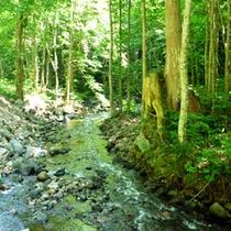 *【風景】自然豊かな空間で過ごす休日…緑と青のコントラストをご堪能下さい。