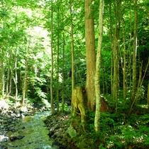 *【風景】美しい緑と青のコントラスト…自然豊かな奥森吉へようこそ!