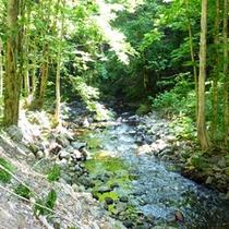 *【風景】自然豊かな奥森吉。日頃の喧騒を離れられます。