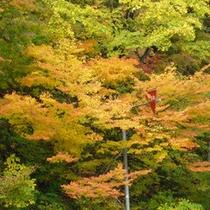*【森吉の紅葉】森吉山は9〜10月に紅葉シーズン到来♪