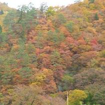 *【森吉の紅葉】360度紅葉のパノラマをお楽しみいただけます。