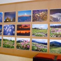 *【館内展示】奥森吉の美しい自然にまつわる展示がございます。