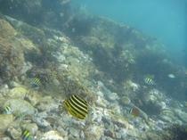 カラフルな魚の群れ