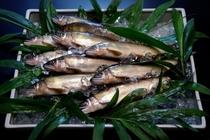 第12回清流めぐり利き鮎会グランプリの郡上産長良川天然鮎