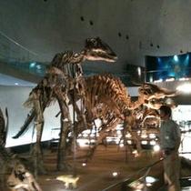 恐竜博物館、ガイドさんと