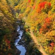 中津川橋より中津川渓谷を望む