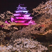 鶴ヶ城夜桜のライトアップ