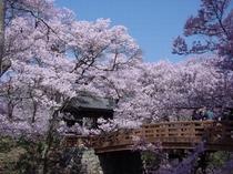 天下第一の桜「高遠城址公園」 一度は是非♪