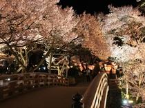 夜は艶やかな花模様♪ 当館から車で20分【高遠城址公園】