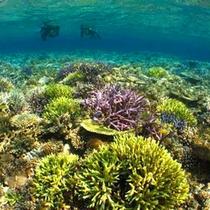 *サンゴ礁