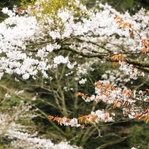 *春の風景