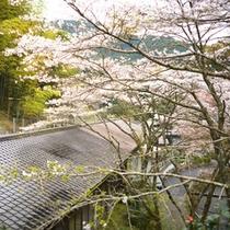 *お部屋の窓から「桜」