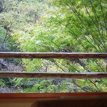 *お部屋の窓から「緑」