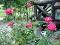 ガーデンのバラも咲き出した♪