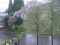 雨も又、新芽の高原