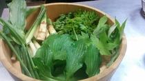 四万の山で採れた新鮮な山菜の数々