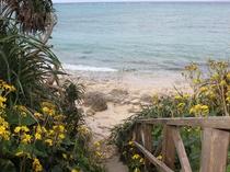 徒歩2分のビーチへ降りる階段です。