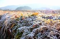 霜が降りた朝