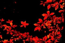 Sun set leaves-a