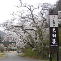 *外観(桜)