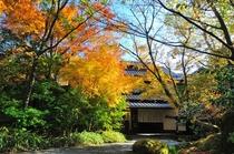 秋紅葉 玄関前