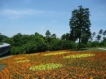 水玉模様の花の丘