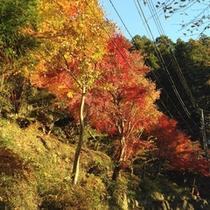 *【周辺】木々が美しく色づく季節…