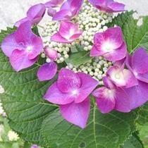*【周辺】四季折々の花をお楽しみ頂けます。