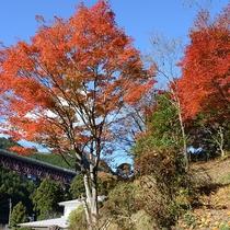 *燃えるような美しい紅葉
