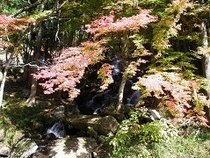 秋・紅葉と不動滝